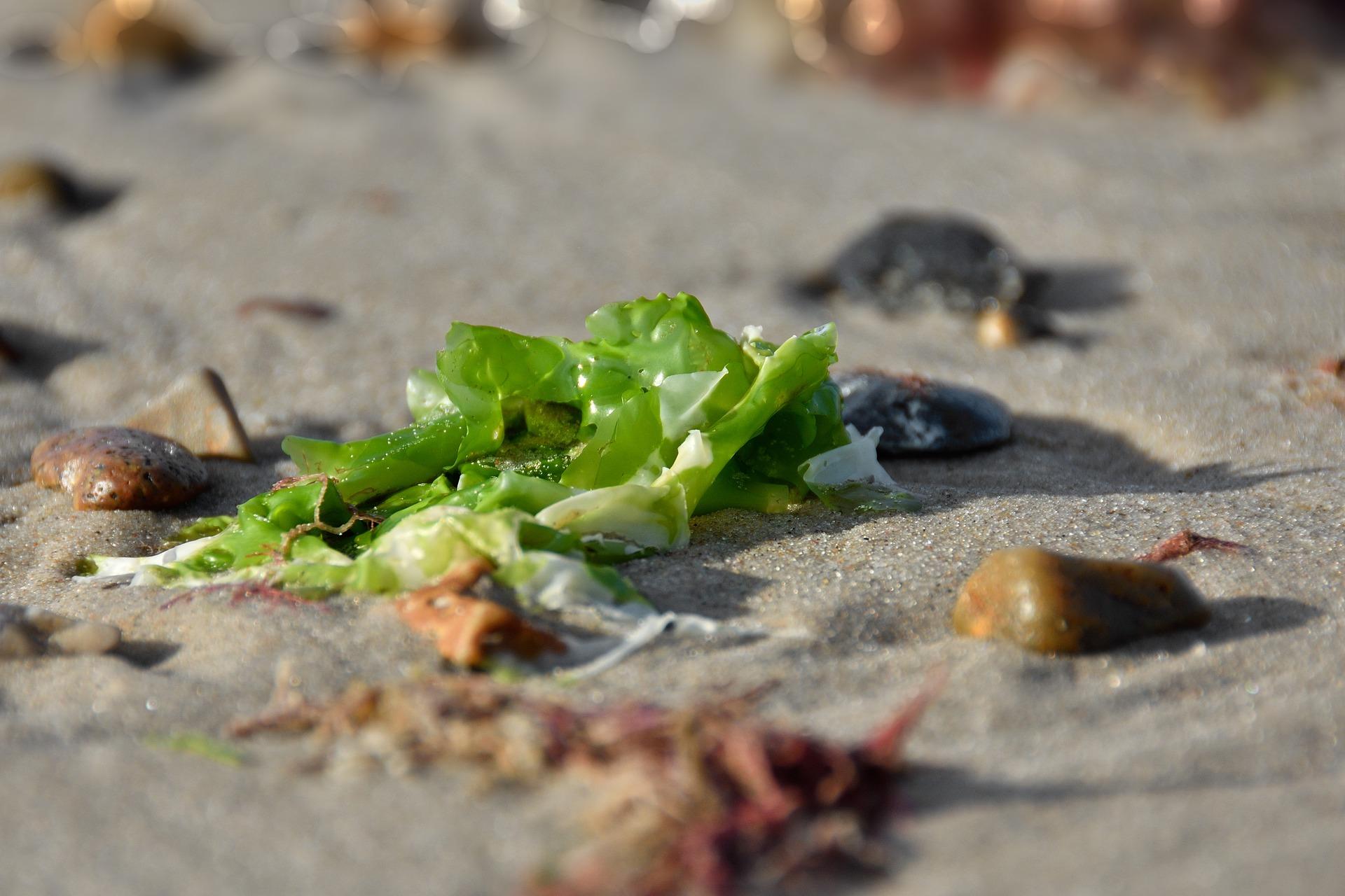 Alge kot glavna sestavina prehranskih dopolnil