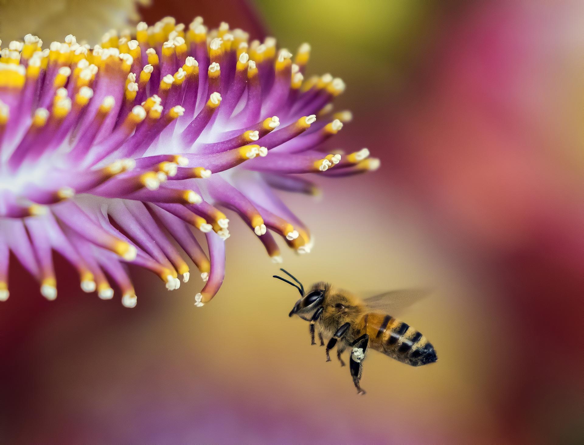 Kateri izdelek s cvetnim prahom je najbolje izbrati?