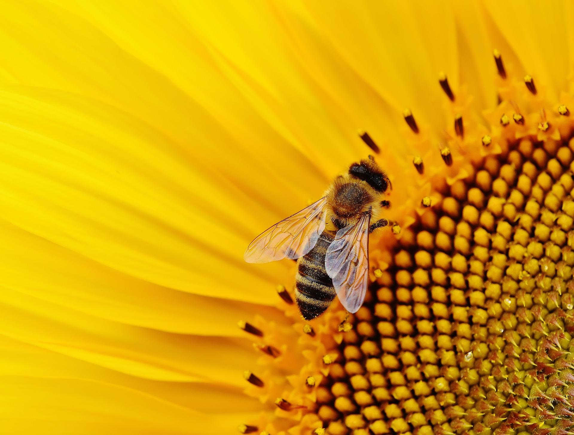 Kaj je cvetni prah in kako deluje?