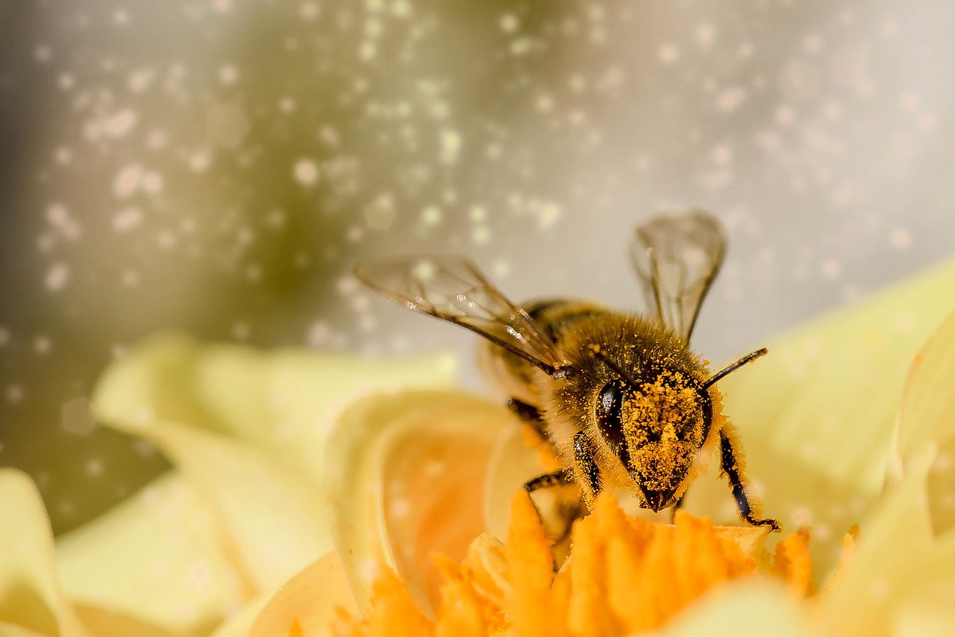 Cvetni prah kot glavna sestavina prehranskih dopolnil
