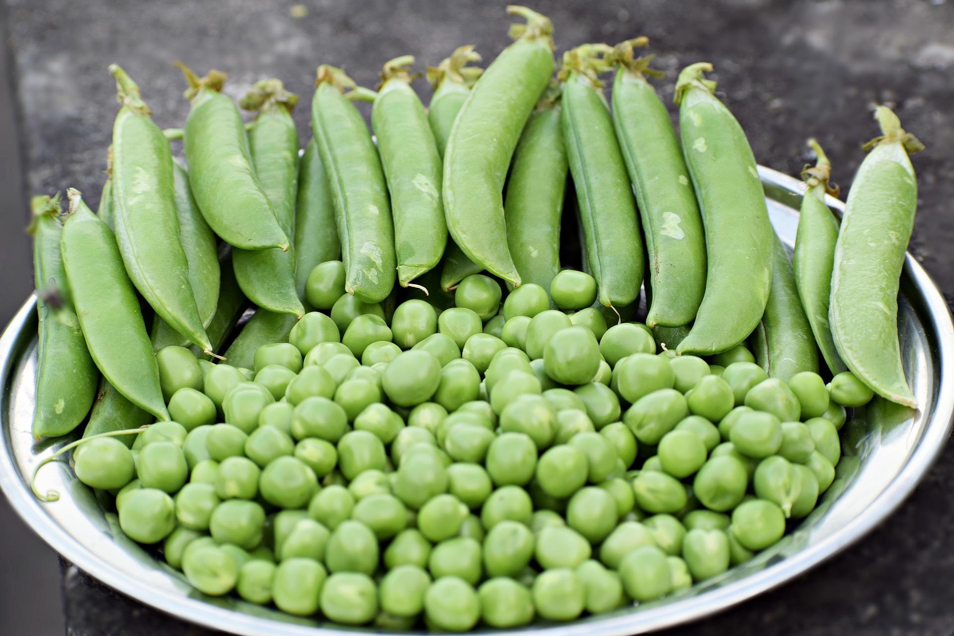 Beljakovine kot glavna sestavina prehranskih dopolnil