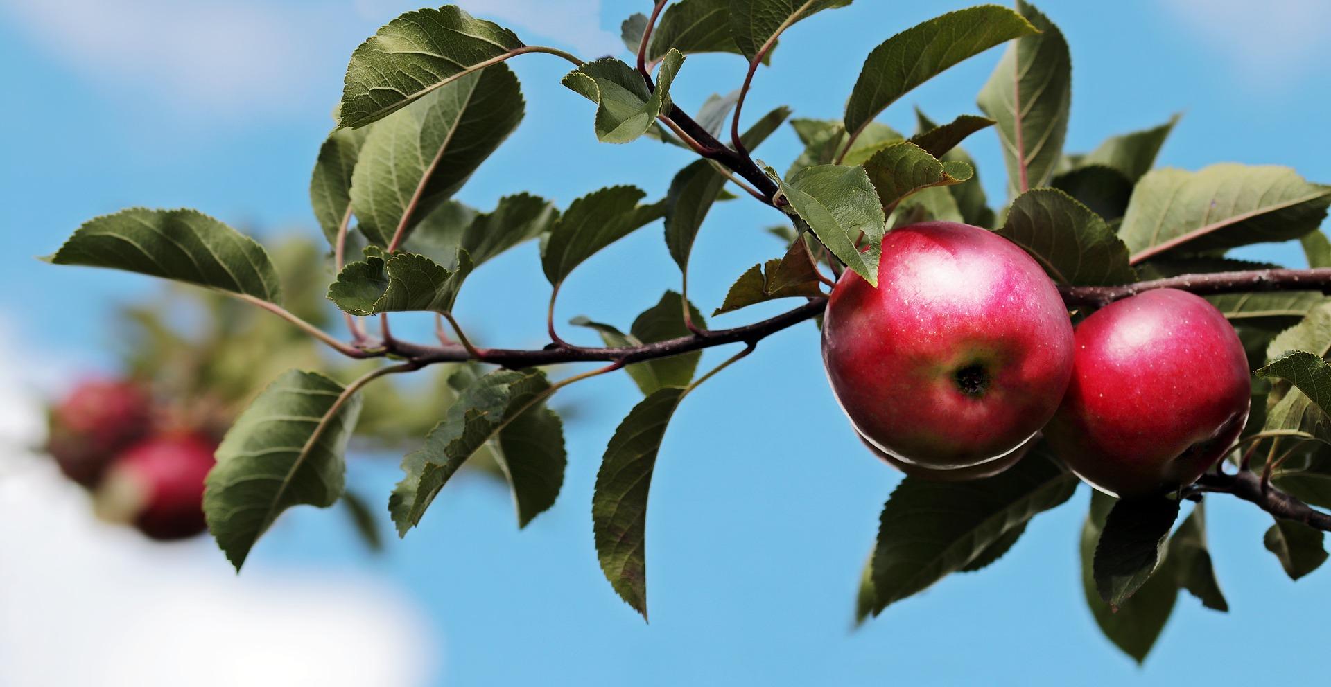 S flavonoidi nad raka in bolezni srca