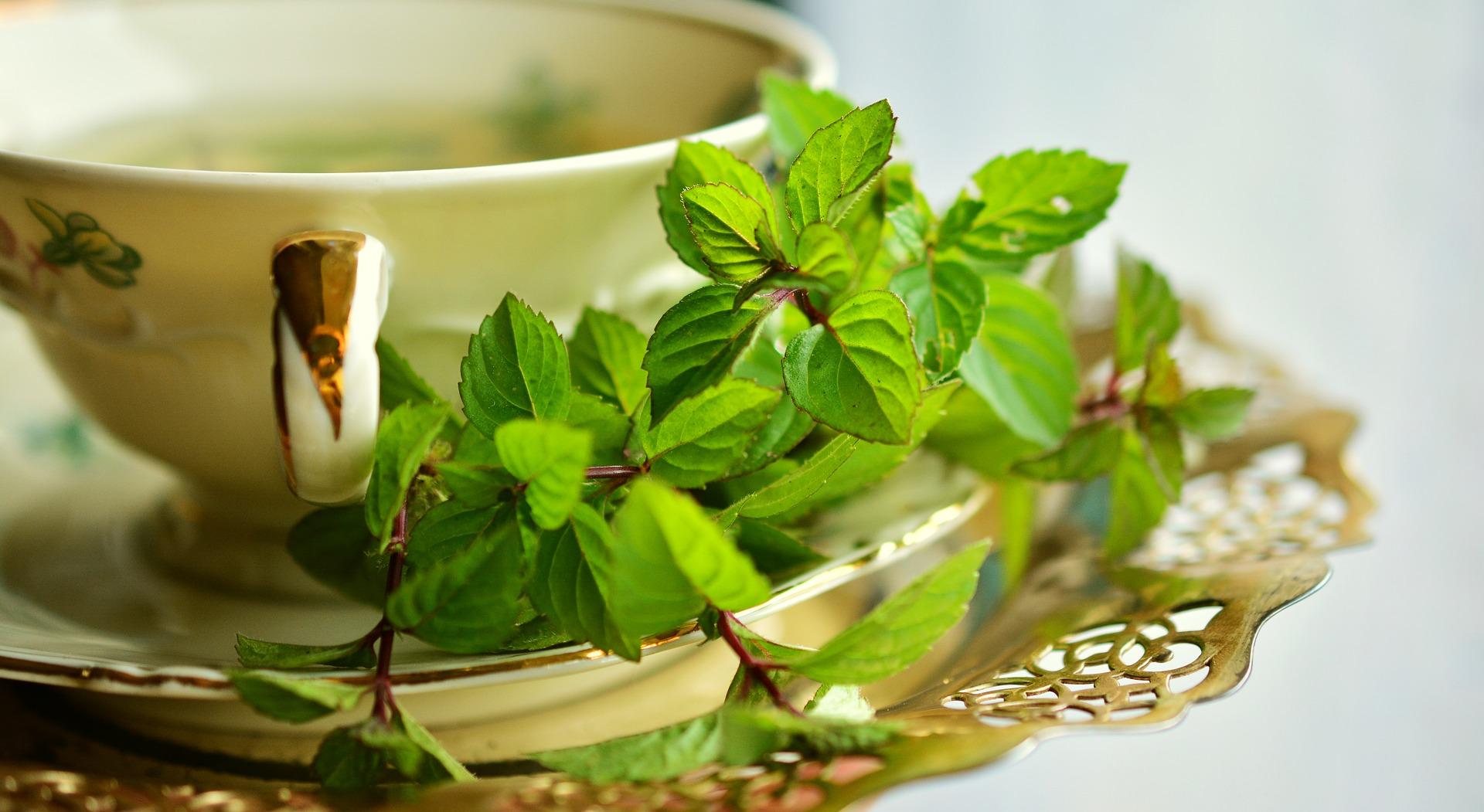 Učinkovitost izvlečka zelenega čaja