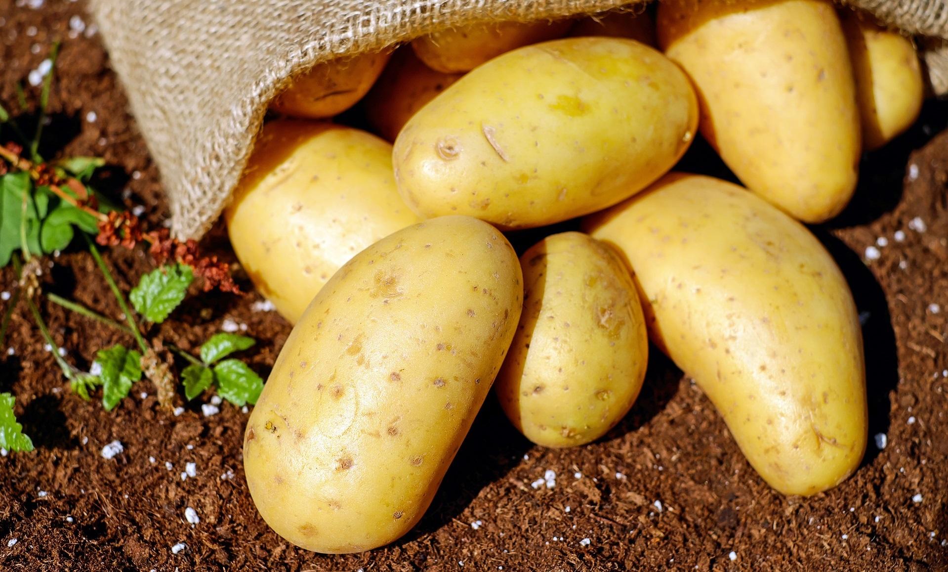 Krompir je vir beljakovin!